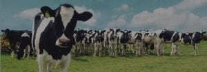 meat and dairy sustainability